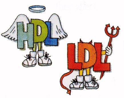 کلسترول خوب یا همان HDL چیست؟ و چگونه می شود آن را افزایش داد