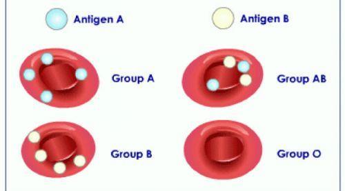 روانشناسی رابطه گروه خونی و شخصیت افراد A B O AB