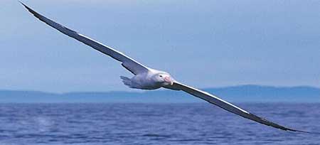 اخبار,اخبار گوناگون ,پهن پیکرترین پرندگان دنیا