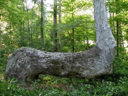 درختان غیر عادی,مکانهای عجیب و غیر عادی,عجایب طبیعت