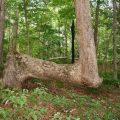 درخت،عجایب طبیعت،درختان غیر عادی