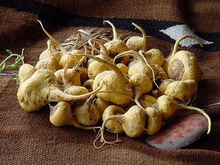 گیاه ماکا خوراکی های تحریک کننده زنان