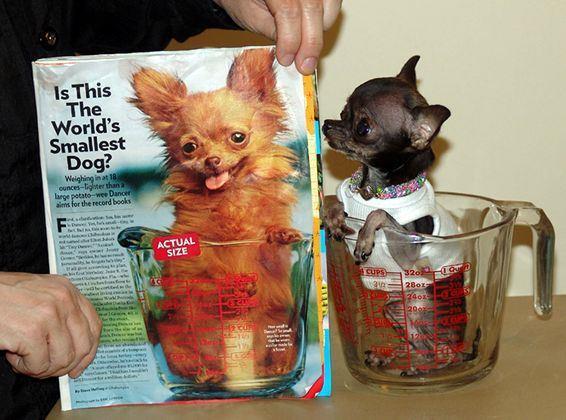 کوچکترین سگ دنیا