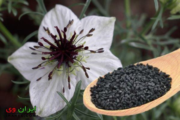 طرز مصرف سیاه دانه برای لاغری