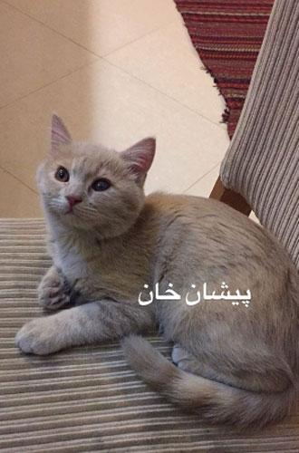 گربه مونا فرجاد