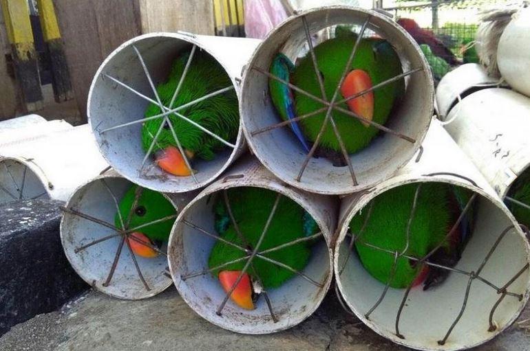 قاچاق بیش از 100 طوطی و پرنده قاچاق در داخل لوله فاضلاب