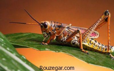 عکس حشرات، عکس حشرات زیبا