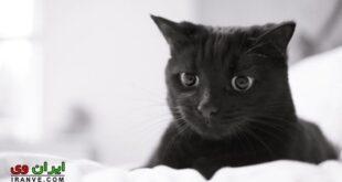 تعبیر خواب گربه سياه