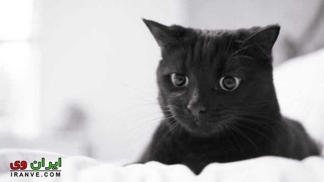تعبیر خواب گربه چیست و دیدن آن چه مفهومی دارد؟