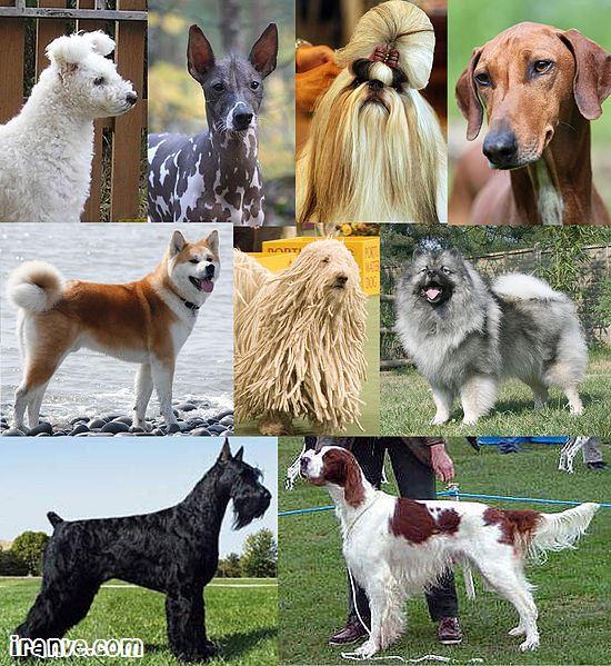 عکس انواع نژاد سگ مختلف