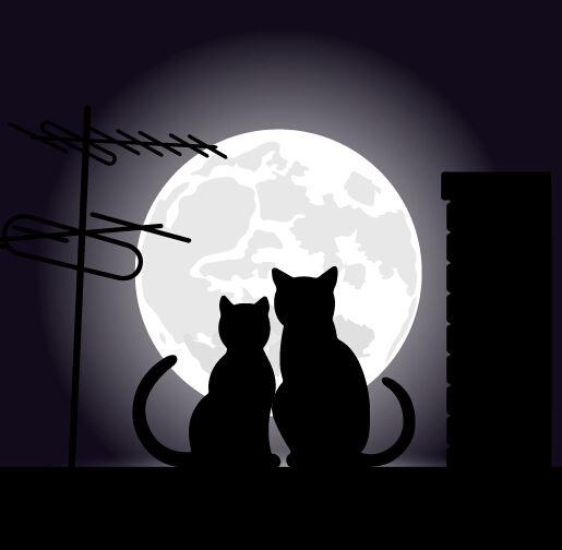 عکس پروفایل عاشقانه گربه های روی پشت بام