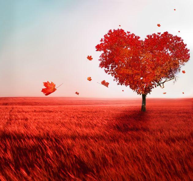 عکس درخت پاییزی نارنجی به شکل قلب عاشقانه