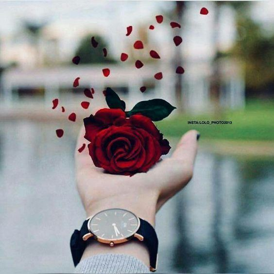 پروفایل عاشقانه دخترونه گل رز قرمز در دست