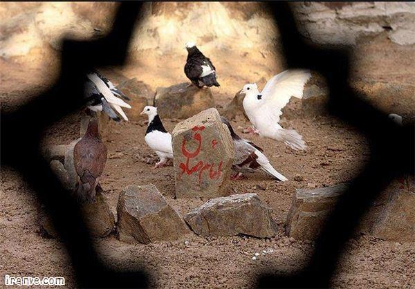 دانلود عکس نوشته شهادت امام صادق