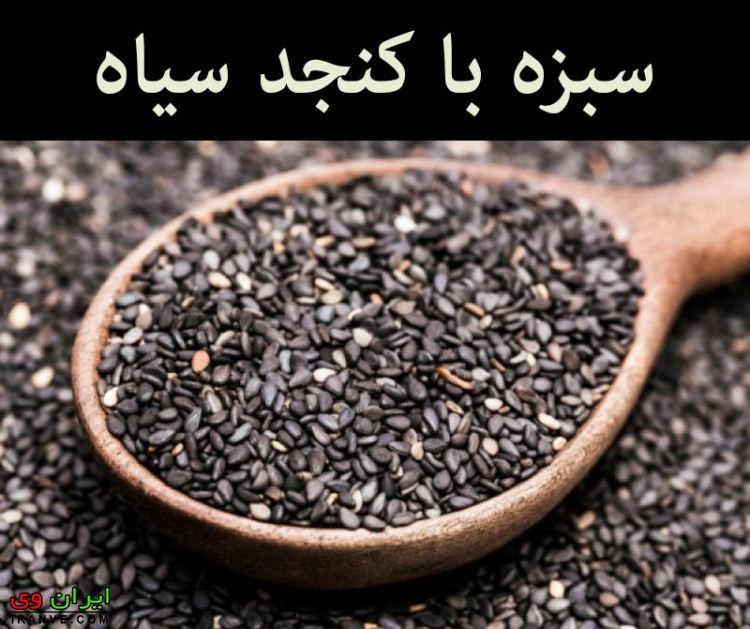 کاشت سبزه کنجد طرز کاشت سبزه عید برای هفت سین انواع مدل عدس ماش گندم نخود ...