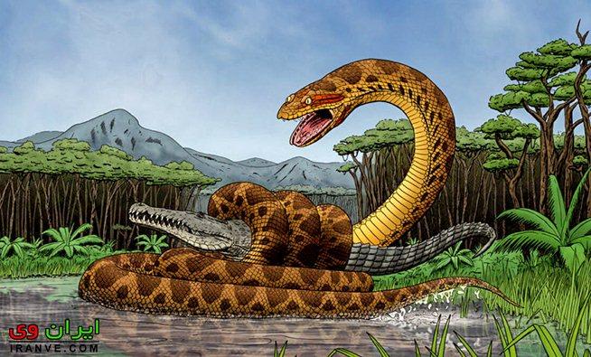 مار تیتانوبوآ در حال شکار یک تمساح کروکودیل غول پیکر