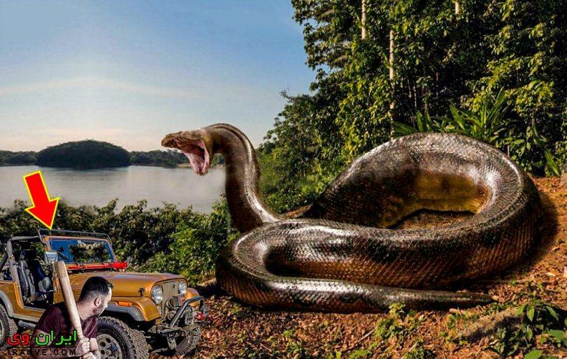 عکس بزرگترین مار دنیا که تا به حال روی زمین زندگی کرده است