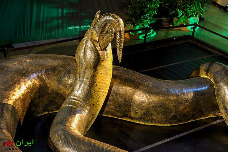 تیتانوبوآ در حال خوردن تمساح در داخل موزه