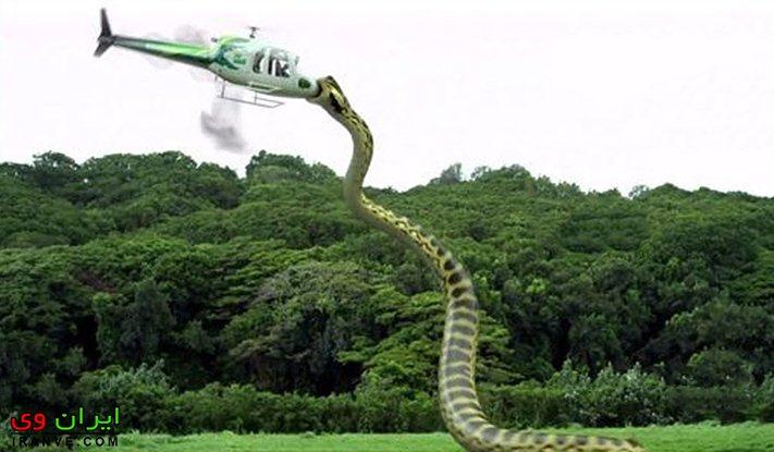 مقایسه ابعاد مار تیتانوبوآ با یک هلیکوپتر و ارتفاع مار