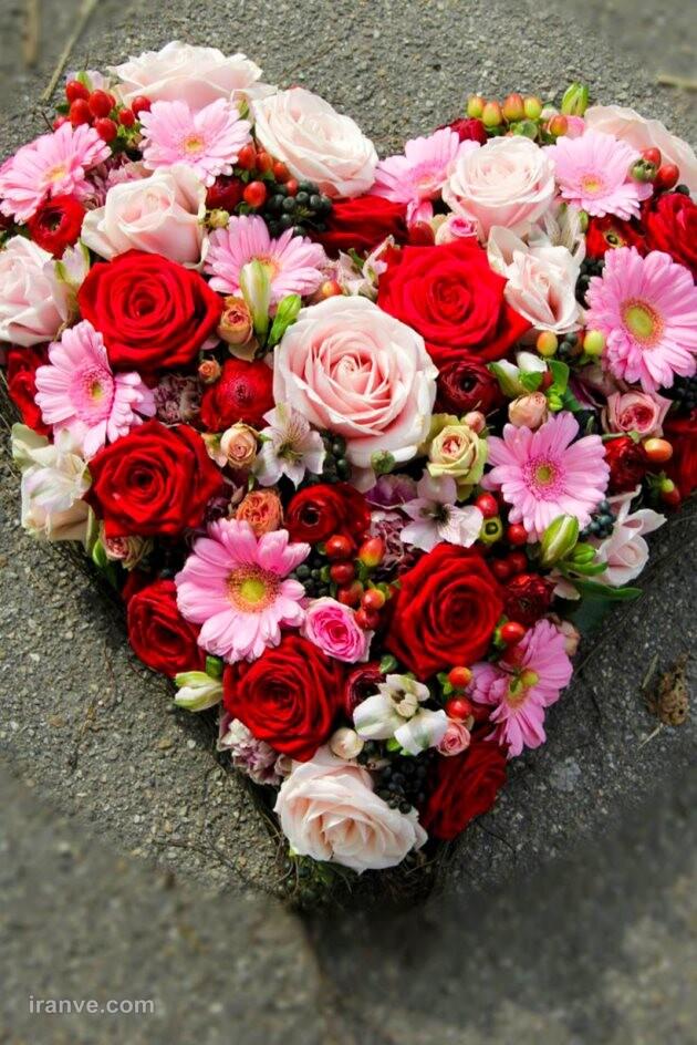 عکس پروفایل گل سرخ عاشقانه