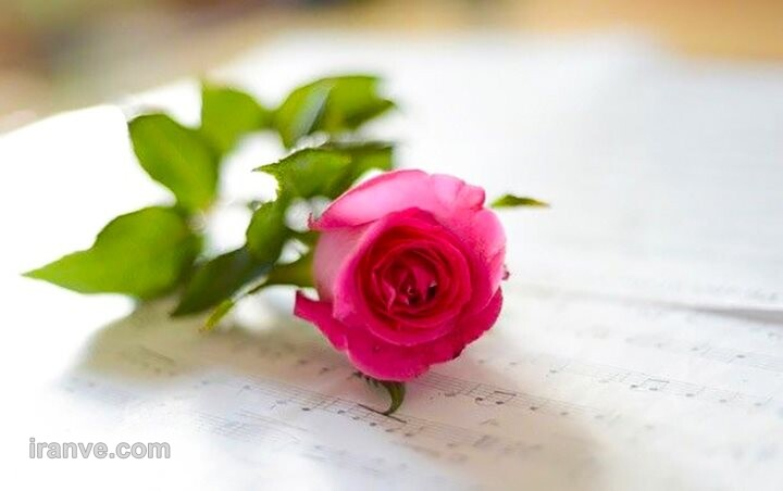 عکس پروفایل گل شمعدانی