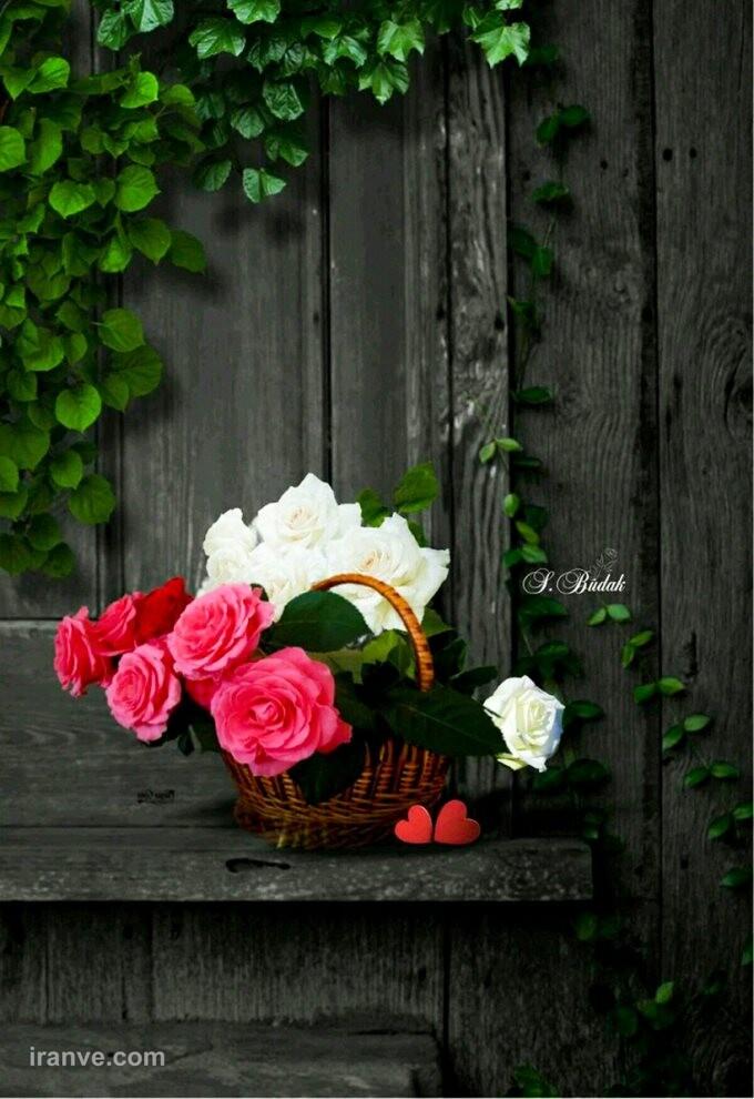 عکس پروفایل گل های صورتی