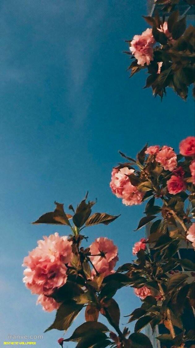 عکس گل غمگین برای پروفایل