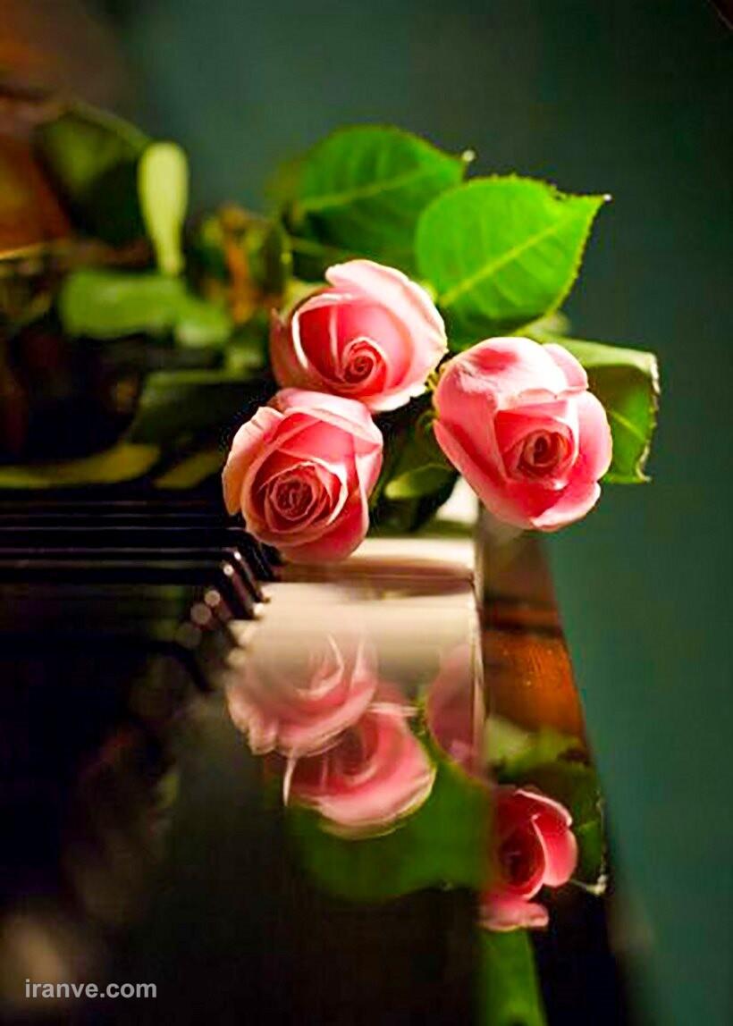 عکس پروفایل گل های بهاری