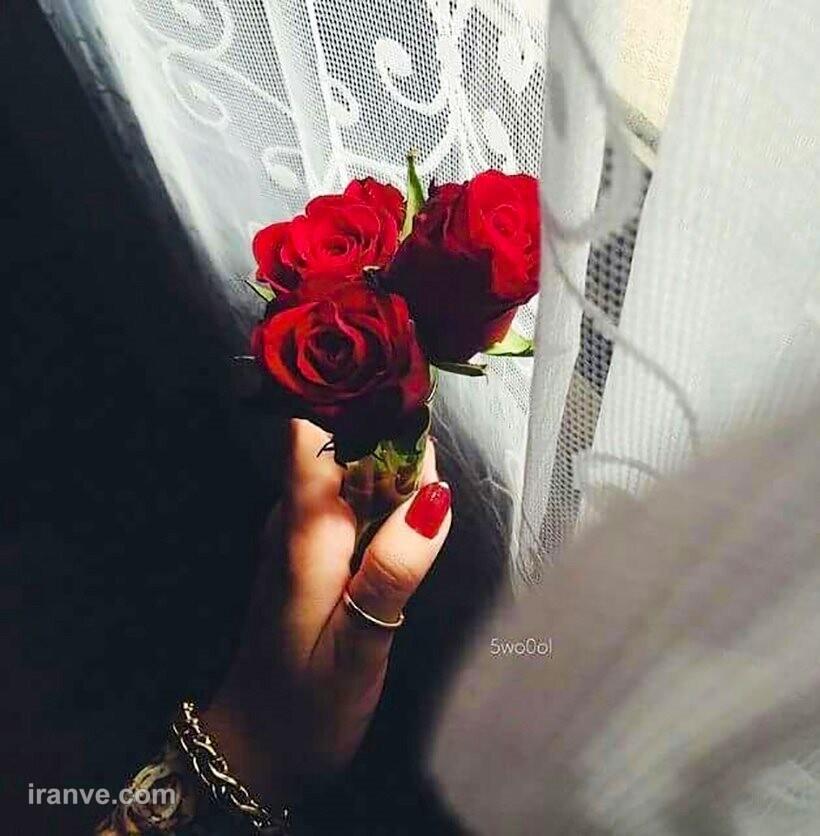 عکس پروفایل گل هدیه