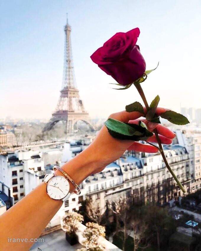 عکس پروفایل گل ها
