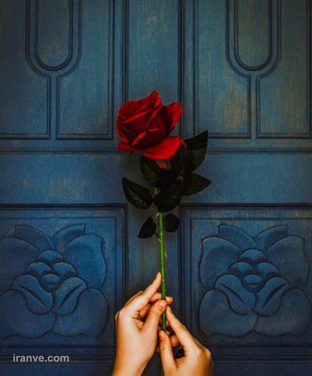 عکس پروفایل گل عاشقی