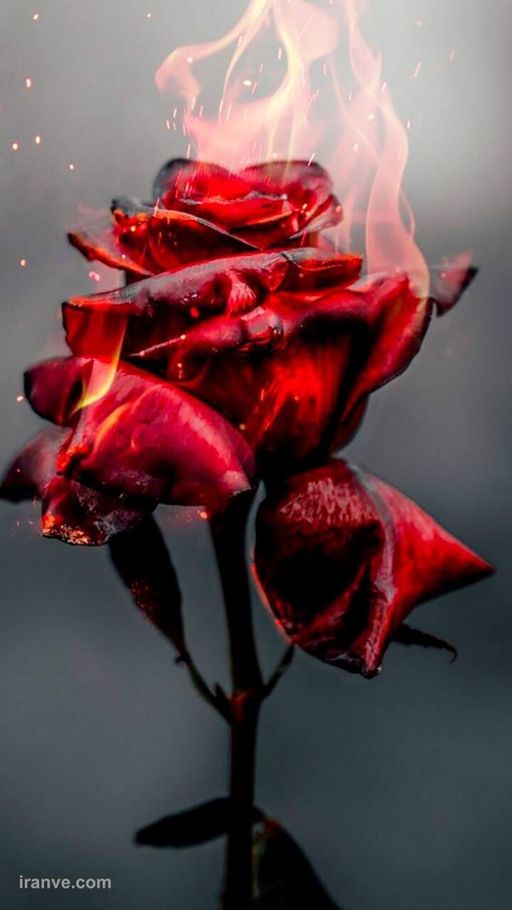 عکس پروفایل گل عروس