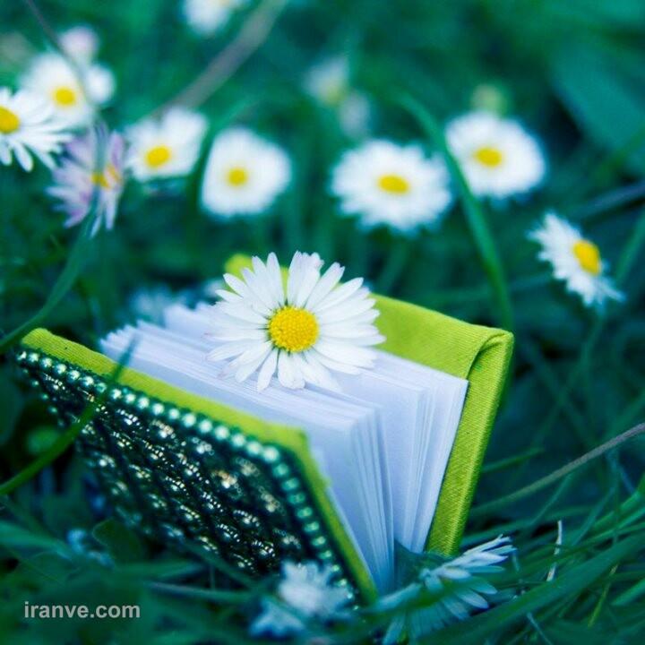 عکس پروفایل گل عشقی
