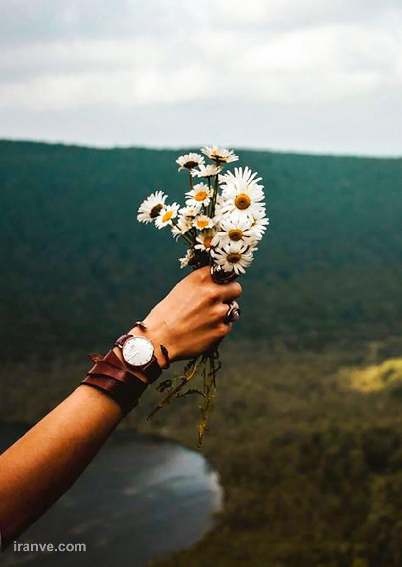 عکس پروفایل گل خیلی زیبا