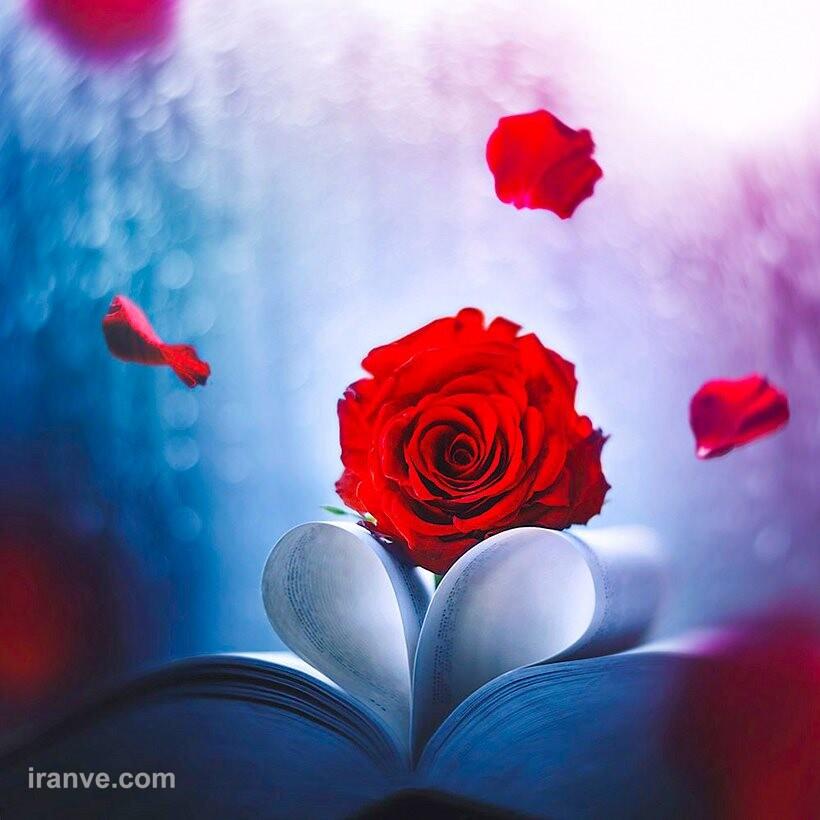 عکس پروفایل گل خونی