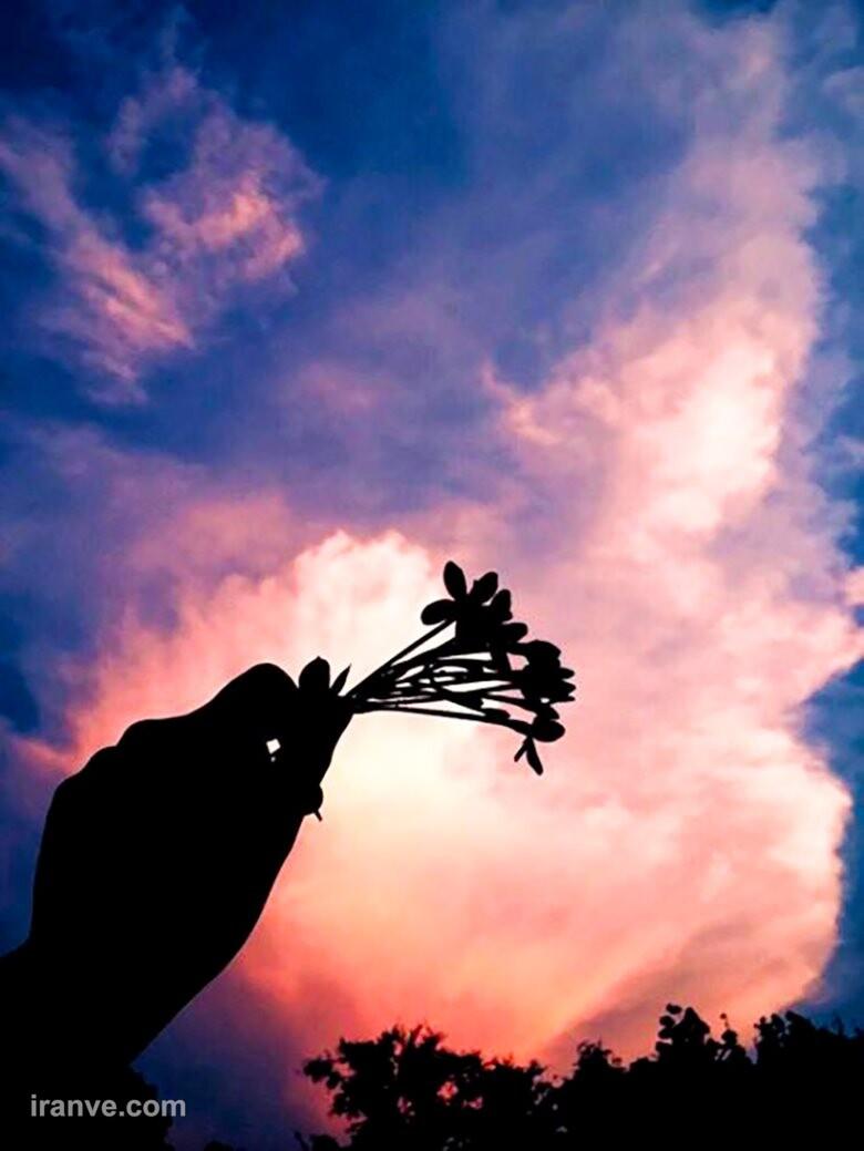عکس پروفایل گل جدید