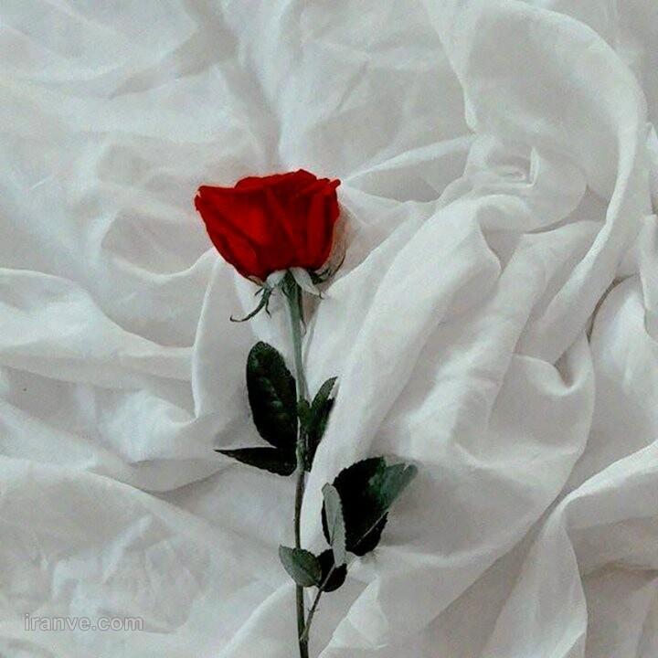 عکس گل برای پروفایل جدید