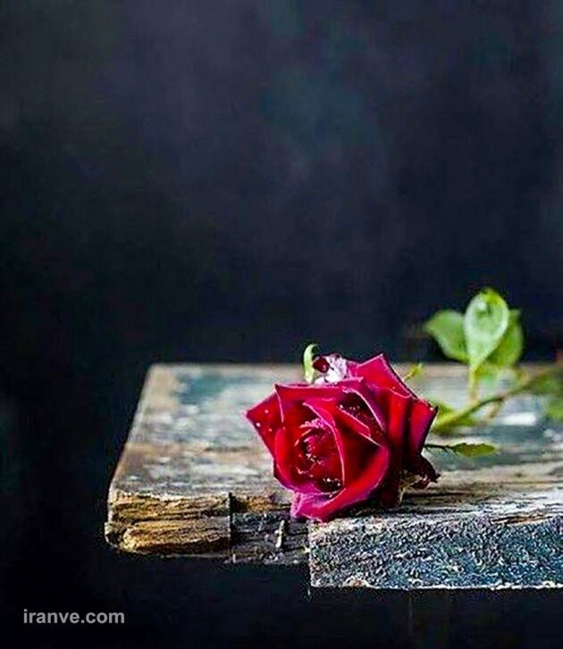 عکس پروفایل گل چیدن
